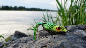 may use frog lures for fishing effectively. In Fathera.com you can get frog lures in different colors, shapes, etc.